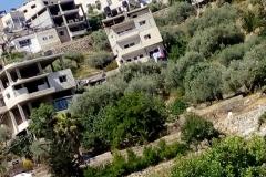 Battir-village-Palestine