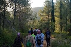 Walking-Palestine