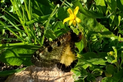 butterfly-closed-wings