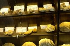 fossils-exhibition