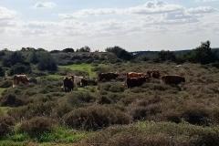Tel-Maresha-Bet-Guvrin-national-park